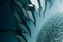 подводный мир*океан*underwater world*ocean, sea / Громадный Океан – всех тайн морских хранитель. Всех волн в себе бушующих порою – накопитель.
