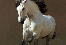 лошади*horses