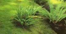 GARDEN – moss (ogród z mchu)