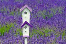 Purple, violet, lavender, oh my! / by Jazmin Parra-Novoa