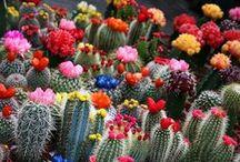 Flora and greens... / by Jazmin Parra-Novoa