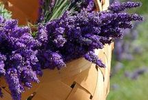 Scent of Lavender and Lilacs