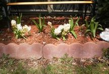 My Hyacinths,irises, and rose bush / by Linda  Bell