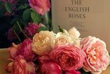 Lovely David Austin Roses