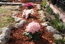 My new Azalea  & Hydrangea garden