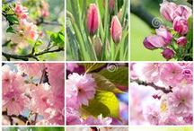 Spring Flowers collages II