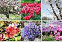Love Of Spring