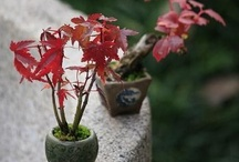 Bonsai  /  The Art of Bonsai: Creation, Care and Enjoyment! 