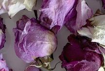 Flowers / #flowers