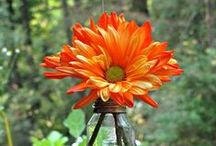 Recycled Items / Items You can Recycle, Repurpose in your Home & Garden!