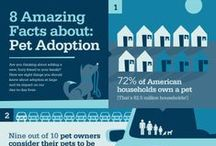 Tips and Facts on Animal Care