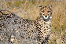 auf Tiersuche im Etosha National Park in Namibia / Tierfotos von unserem 4 tägigen Besuch des Etosha National Parks