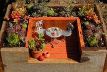 Jardines en miniatura.