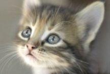 Cutest kitties / by Curiosités d'antan