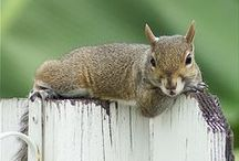 Adorable animals / by Pamela McLaughlin