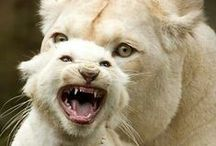 Animals - felines / by Glasspetal