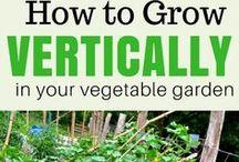 Zone 7 Gardening / zone 7 gardening group board