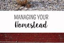 ::All Things Homesteading:: / All things homesteading, livestock, crops, layout, etc.