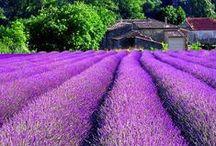 Vinice, které bych rád navštívil / Víno, vinice, příroda, kultura
