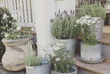 Outdoor and garden ideas