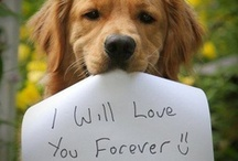 Cute Doggies :p