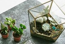 Terrariums- The garden that lives on your kitchen table / Who said your apartment can#t have a garden?
