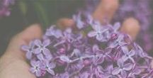 Essential Oils / Essential Oils blends, recipes, information, and more. I love learning about these! I'm growing my collection both in my home and on pinterest.