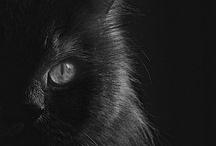 Noir : in the mood for black
