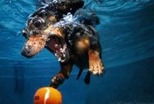 Animals That Swim : Simply Swim / It's not just for people you know, animals love to swim too you know! / by Simply Swim