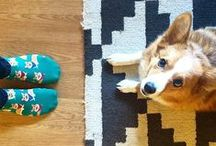 Pets and Socks / When adorable animals and crazy socks collide!