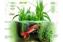 aquatic design / sustainable design and architecture