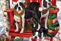 Dog wooll sweater / Köpek dış giyim