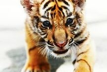 CAN I HAVE ONE / SO CUTE