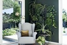 Green Thumb / Beautiful plants to spruce up your home