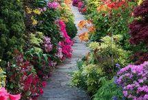 WALK IN THE GARDEN / Walk in the Garden