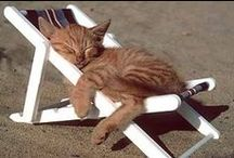 WHAT I LIKE ABOUT SUMMER / What I like about summer