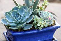 Květinový sad Succulents