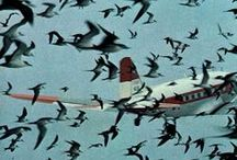 LINDIVIDU * birds