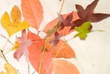 LINDIVIDU * autumn