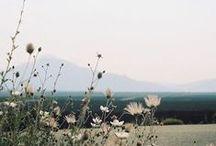 LINDIVIDU * summer white