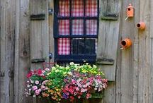 ALL COTTAGE GARDENS / Feel free to post your favorite cottage gardens, plants and plant border images here! Please show only vertical pictures and add a one line description only. Enjoy! If you'd like to be invited to join this board just follow the board and leave a comment on the board saying you'd like to join!  / by Silvia Dekker