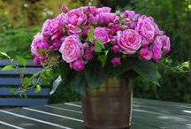 Flowers: beautiful blooms / A collection of beautiful flower arrangements.