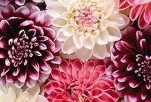 Flores para decorar! / Inspiração das flores mais lindas para decorar algum cantinho da sua casa nova!