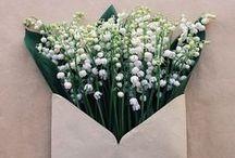 Flowers / Beautiful flowers :)