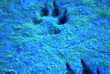 Wolves honey Wolves