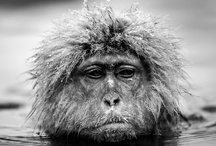 'Recent Encounters' David Yarrow / 'Recent Encounters' is the culmination of images from his latest trips to some of the most remote and often climatically intimidating parts of the world from the parched plains of East Africa to the frozen Antarctic. He patiently and strategically captures some of the world's most intriguing creatures within the in the harsh environments that define them.