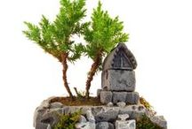 Bonsai / http://www.fideland.com.tr/bonsai
