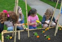 Organic Gardening at the Guidance Center / The Guidance Center has incorporated organic gardening into its group work program to help children and teens to learn the many lessons from planting, caring for their seedlings and gathering and donating their bounty.