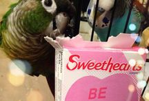 For the Birds / For Nalu and Elroy, my beloved silly little feathery monsters  / by Rachael Beck