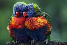 Birds - Parrots / Photography and art of parrots, including macaws and lorikeets. / by Stephanie L